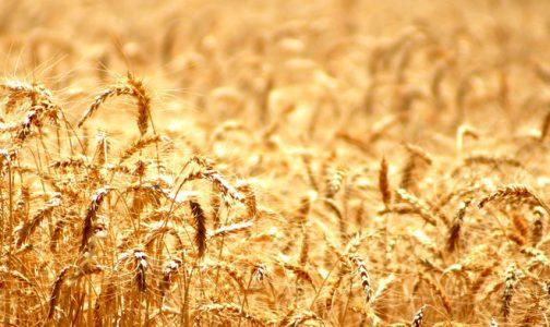Reflexión del Mes de Octubre: La generosidad divina
